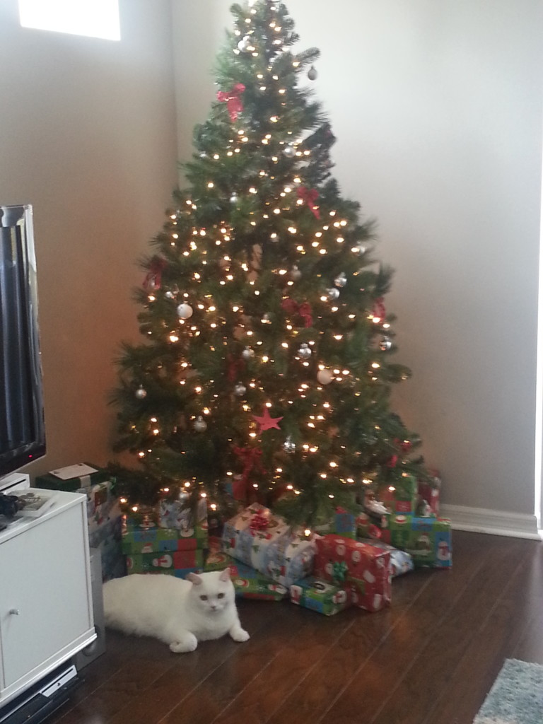 Casper the watchcat guards the gifts until we're ready to open them.